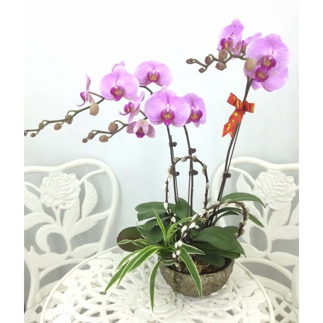 3 selected Orchids