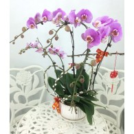 5 selected Orchids