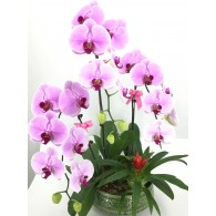 3 Pink Orchids in Dish Deco