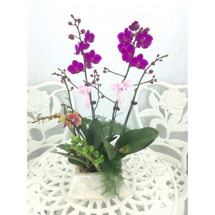 5 Orchids with shell pot