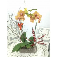 2 Orchids with pot