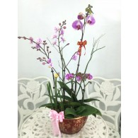 5 Orchids with pot