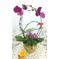 4 Orchids with pot