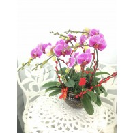 6 selected Orchids