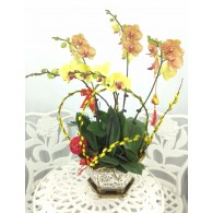 5 selected Orchids with pot