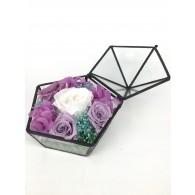 Secret Garden in Glass Box