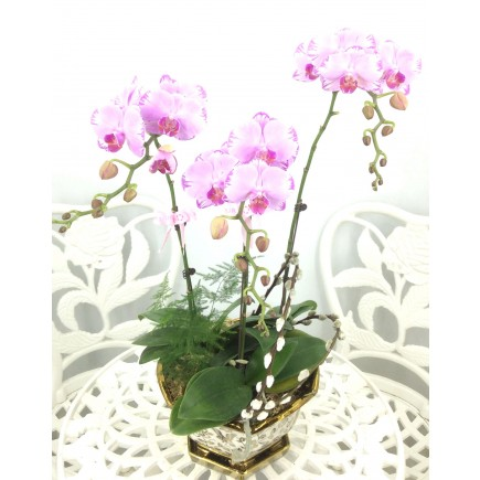 3 Orchids with pot