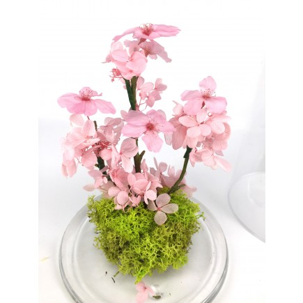 Sakura Blush
